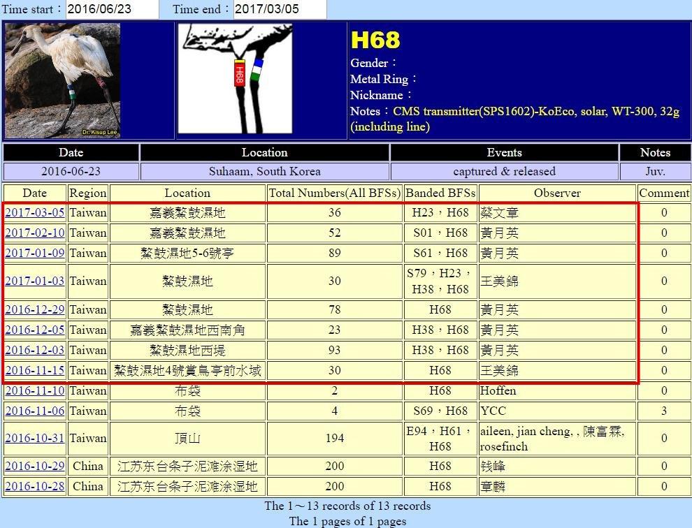 黑面琵鷺H68於20160623繫放後在台紀錄-20170305-後製.jpg - 黑面琵鷺