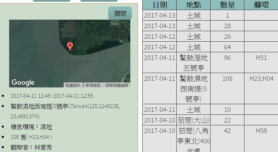 黑琵H04H23在鰲鼓濕地登錄紀錄-20170411-林韋秀.jpg - 黑面琵鷺
