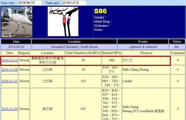 黑面琵鷺S86於20140626繫放後在台紀錄-20161012-縮-後製.jpg - 黑面琵鷺