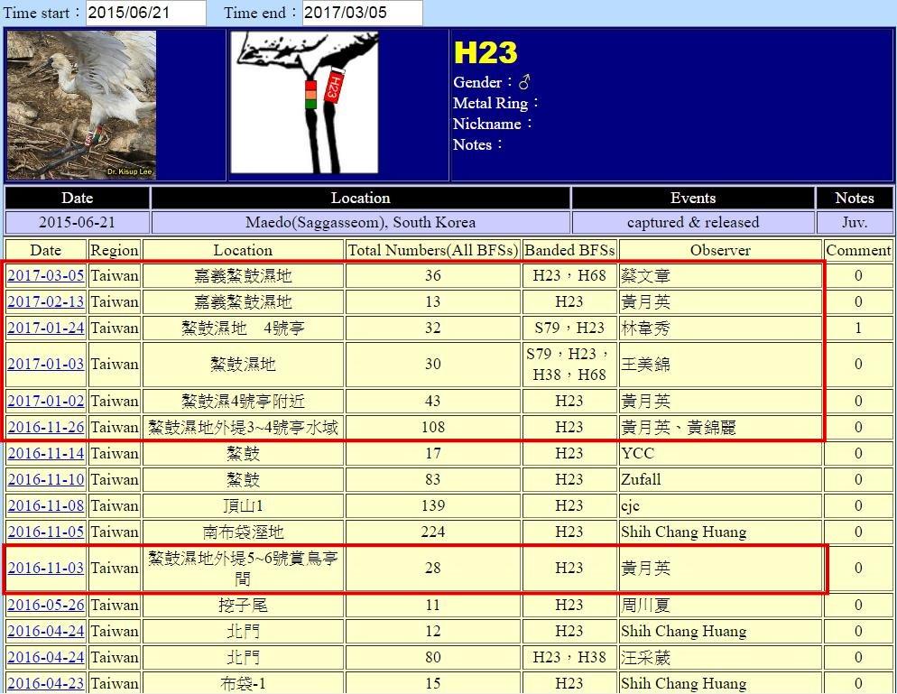 黑面琵鷺H23於20150621繫放後在台紀錄-20170102之後-20170305-後製.jpg - 黑面琵鷺
