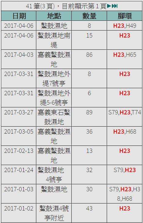 黑琵H23在台紀錄-20170102之後-20170406.jpg - 黑面琵鷺