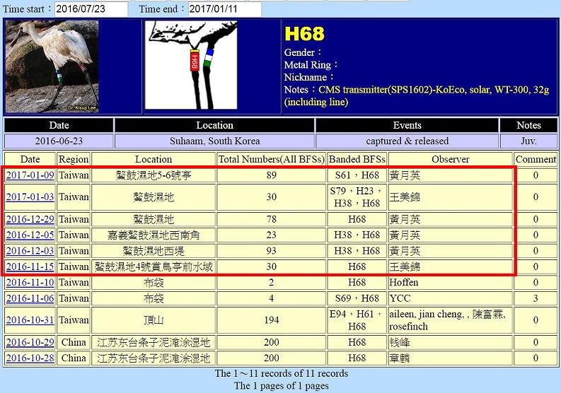 黑面琵鷺H68於20160623繫放後在台紀錄-20170109-後製.jpg - 黑面琵鷺