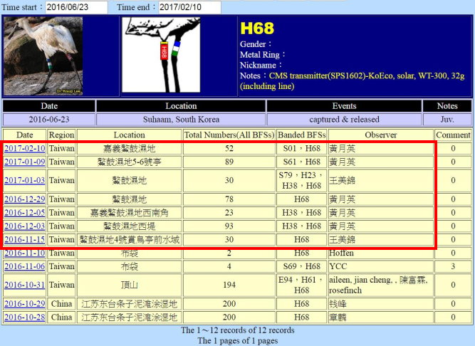 黑面琵鷺H68於20160623繫放後在台紀錄-20170210-縮-後製.jpg - 黑面琵鷺