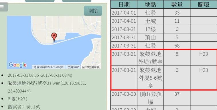 黑琵H23在鰲鼓濕地登錄紀錄-20170331-黃月英-後製.jpg - 黑面琵鷺