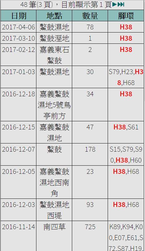 黑琵H38在台紀錄-20161114之後-20170406.jpg - 黑面琵鷺