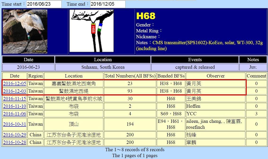 黑面琵鷺H68於20160623繫放後在台紀錄-20161205-後製.jpg - 黑面琵鷺
