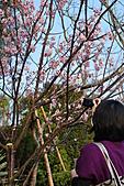 跟老爸老媽去田尾騎腳踏車買櫻花苗_20110306:DSC_7638.JPG