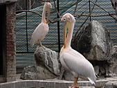 新竹市立動物園_20110416【小脩9m11d】:DSCN0490.JPG