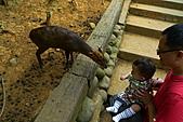 新竹市立動物園_20110416【小脩9m11d】:P1040683.JPG