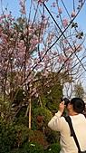 跟老爸老媽去田尾騎腳踏車買櫻花苗_20110306:P1040319.JPG