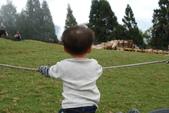 盧山清境遊Day2_20111113【小脩1Y4M】:DSC_4646.JPG
