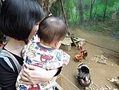 新竹市立動物園_20110416【小脩9m11d】:DSCN0478.JPG