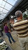 跟老爸老媽去田尾騎腳踏車買櫻花苗_20110306:P1040295.JPG