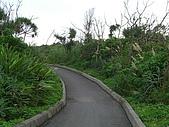 宜蘭新水自行車道:新水自行車道_007防風林道2.JPG
