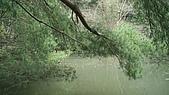 元旦中部行--三義的綠葉方舟:DSC00160.JPG