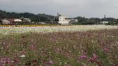 20100215美濃花海之旅:DSC00034.jpg