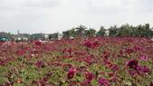 20100215美濃花海之旅:DSC00032.jpg