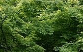 歐洲風情:Leaves.jpg