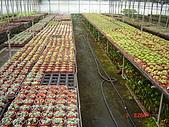 溫室設施-08年:(下)第二棟-石蓮區.JPG
