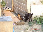 其他雜七雜八的:觀景台的小狗