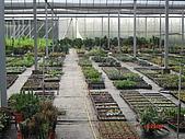 溫室設施-08年:上邊田-母棵中苗區.JPG
