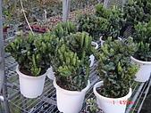 多肉植物-08年-母棵中苗:M7-TT-春峰.JPG