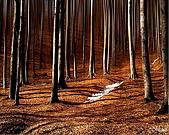 其他:The wood.jpg