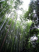 京阪神五日遊:IMG_0608.JPG