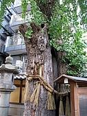 京阪神五日遊:IMG_1109.JPG