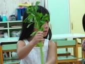 20110811_科學小博士-芹菜吸水:20110811_科學小博士-芹菜吸水 (10).JPG