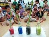 20110811_科學小博士-芹菜吸水:20110811_科學小博士-芹菜吸水 (12).JPG