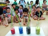 20110811_科學小博士-芹菜吸水:20110811_科學小博士-芹菜吸水 (13).JPG