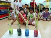 20110811_科學小博士-芹菜吸水:20110811_科學小博士-芹菜吸水 (14).JPG