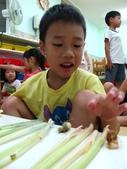 20110811_科學小博士-芹菜吸水:20110811_科學小博士-芹菜吸水 (45).JPG