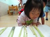 20110811_科學小博士-芹菜吸水:20110811_科學小博士-芹菜吸水 (16).JPG