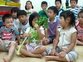 20110811_科學小博士-芹菜吸水:20110811_科學小博士-芹菜吸水.JPG