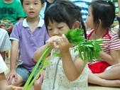 20110811_科學小博士-芹菜吸水:20110811_科學小博士-芹菜吸水 (1).JPG