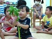 20110811_科學小博士-芹菜吸水:20110811_科學小博士-芹菜吸水 (2).JPG