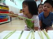 20110811_科學小博士-芹菜吸水:20110811_科學小博士-芹菜吸水 (17).JPG