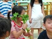 20110811_科學小博士-芹菜吸水:20110811_科學小博士-芹菜吸水 (4).JPG