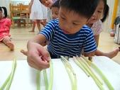 20110811_科學小博士-芹菜吸水:20110811_科學小博士-芹菜吸水 (19).JPG
