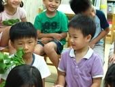20110811_科學小博士-芹菜吸水:20110811_科學小博士-芹菜吸水 (5).JPG