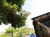 20111102_文化中心探尋阿勃勒樹&美語課&唐詩時間:20111102_文化中心探尋阿勃勒樹 (7).JPG