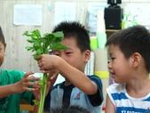 20110811_科學小博士-芹菜吸水:20110811_科學小博士-芹菜吸水 (8).JPG
