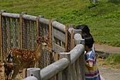 綠島之旅:梅花鹿保護區