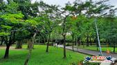 大安森林公園~黃金雨:大安森林公園~黃金雨 (9).jpg