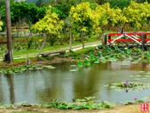 綠光海風自行車道&石蓮園:綠光海風自行車道&石蓮園 (13).jpg