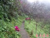 基隆紅淡山步道:基隆紅淡山步道 (21).jpg