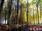 桃園八德落羽松森林:桃園八德落羽松森林 (14).jpg