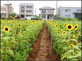 2013向陽農場初夏:向陽農場 (17).jpg